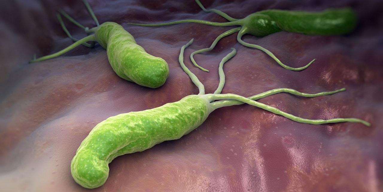 Лечение гастрита и Helicobacter pylori