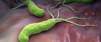 helicobacter pylori (хеликобактер)